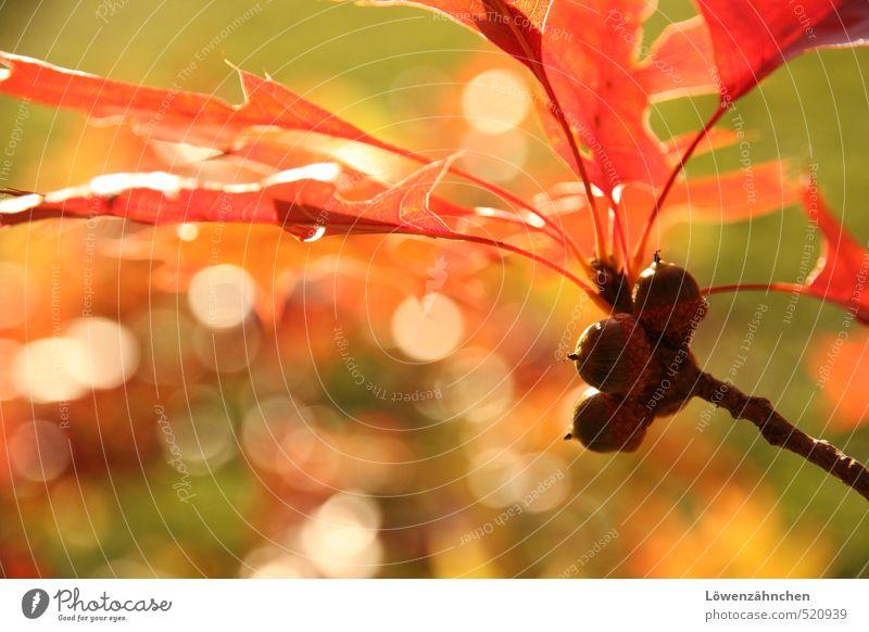 bright side of fall Natur grün Farbe Pflanze rot Blatt Wald gelb Wärme Herbst hell Stimmung orange leuchten Schönes Wetter Fröhlichkeit
