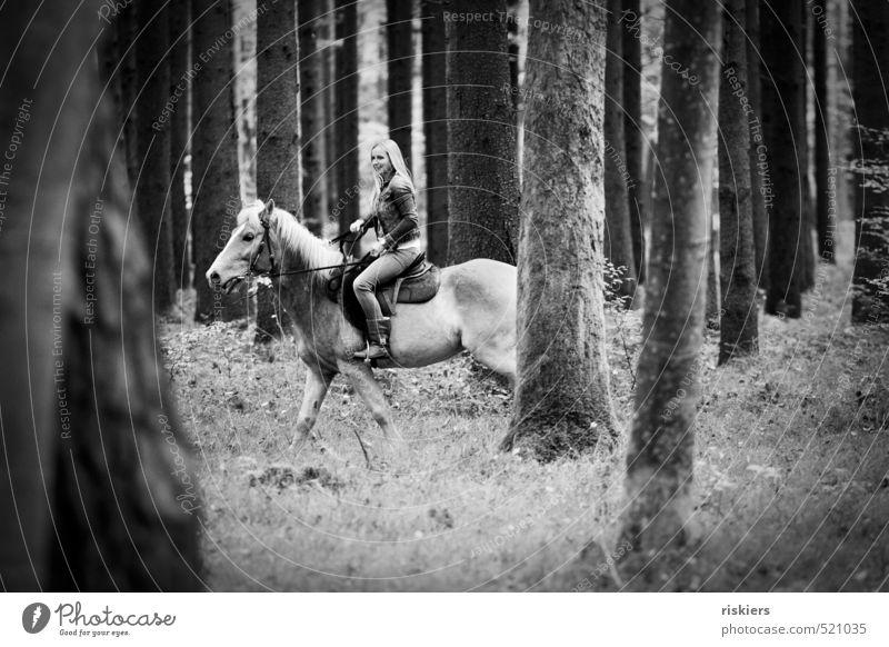 streifzüge durch den wald feminin Junge Frau Jugendliche Erwachsene Leben 1 Mensch 18-30 Jahre Umwelt Natur Herbst Schönes Wetter Wald Tier Haustier Pferd