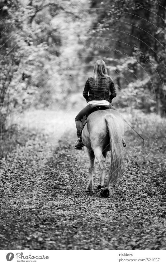 streifzüge durch den wald ii Mensch Frau Jugendliche Erholung Junge Frau ruhig Tier 18-30 Jahre Wald Erwachsene Leben Herbst natürlich Kraft Idylle