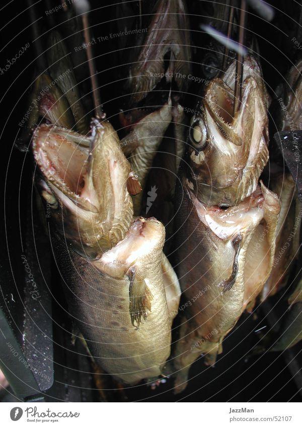 Hang Loose Fisch lecker Haken Herd & Backofen Forelle geräuchert Totes Tier Fischmaul Fischkopf Räucherforelle
