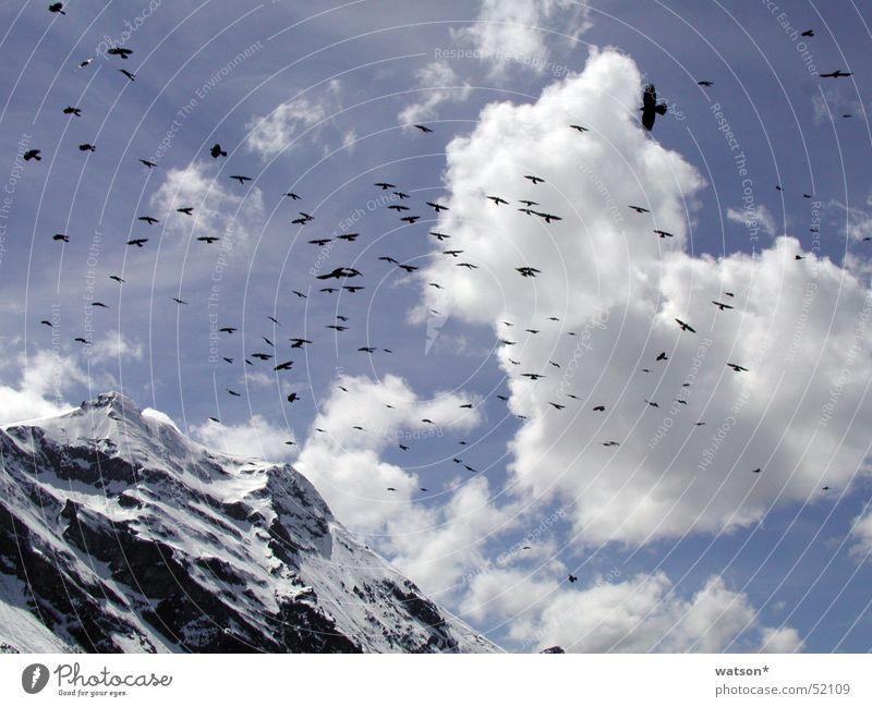 vögel Vogel Wolken Himmel Berge u. Gebirge Schnee Felsen fliegen