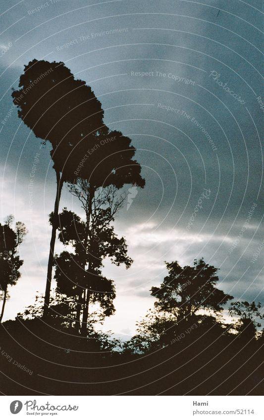 Regenwald Urwald Baum Costa Rica Abenddämmerung Sonnenuntergang Wolken Wald Himmel