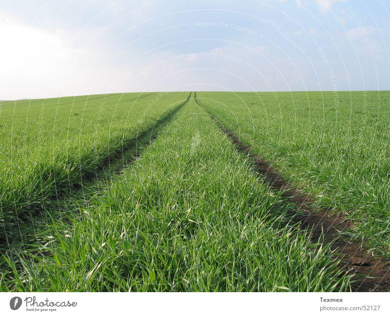 Weg zum Himmel grün Ferne Wiese Gras Frühling Wege & Pfade frisch Wachstum Unendlichkeit aufstrebend Reifezeit himmelwärts
