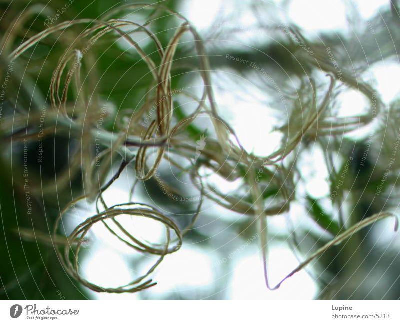 Seltsame Kringel Pflanze abstrakt Natur