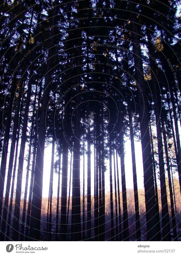 Den Wald vor lauter Bäumen ... Baum dunkel Beleuchtung Strahlung Licht Natur Pflanze Schatten Lichterscheinung hell outside woods forest plants tree trees dark