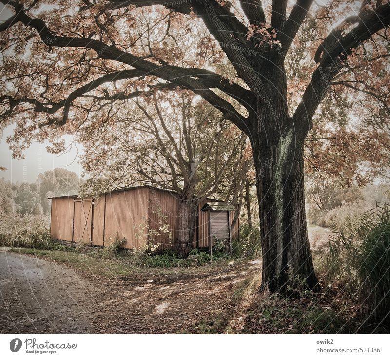 Trüber Nachmittag Natur alt Pflanze Baum Landschaft dunkel Umwelt Traurigkeit Herbst Wege & Pfade Wetter Idylle Klima trist Sträucher Schönes Wetter