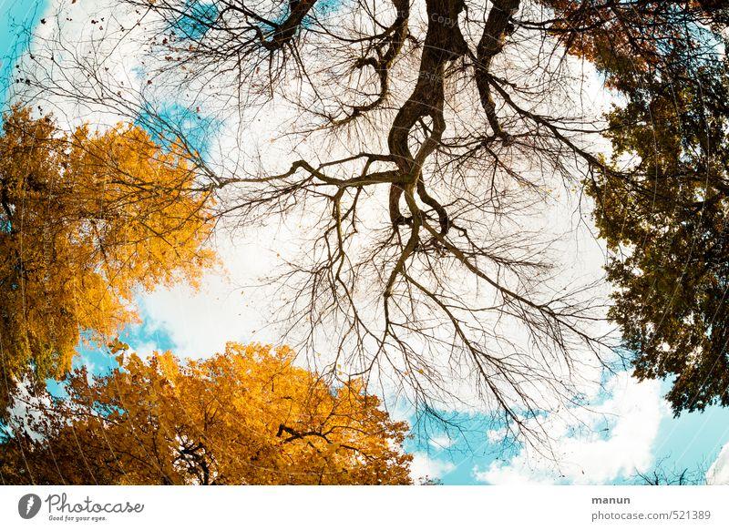 Zeitumstellung - der Wechsel kommt Natur Himmel Herbst Schönes Wetter Baum Blatt Ewigkeit natürlich Perspektive Vergänglichkeit Wandel & Veränderung Farbfoto