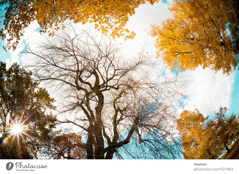 Herbsthimmel Himmel Wolken Sonne Wetter Schönes Wetter Baum herbstlich Herbstbeginn Herbstfärbung Herbstwald Herbstwetter Umweltschutz Vergänglichkeit