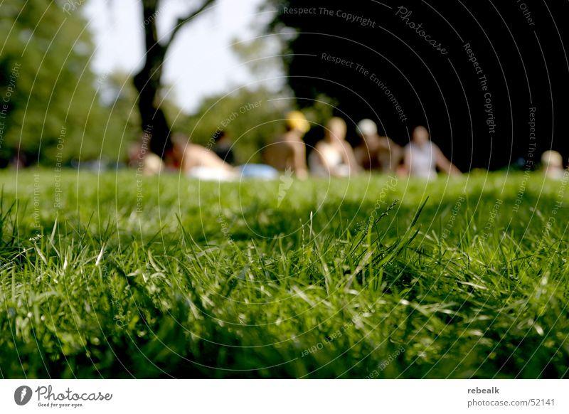 grasshopping Mensch grün Sonne Sommer Freude Ferien & Urlaub & Reisen Erholung Leben Wiese Freiheit Gras Menschengruppe Wärme Park Freundschaft Zusammensein