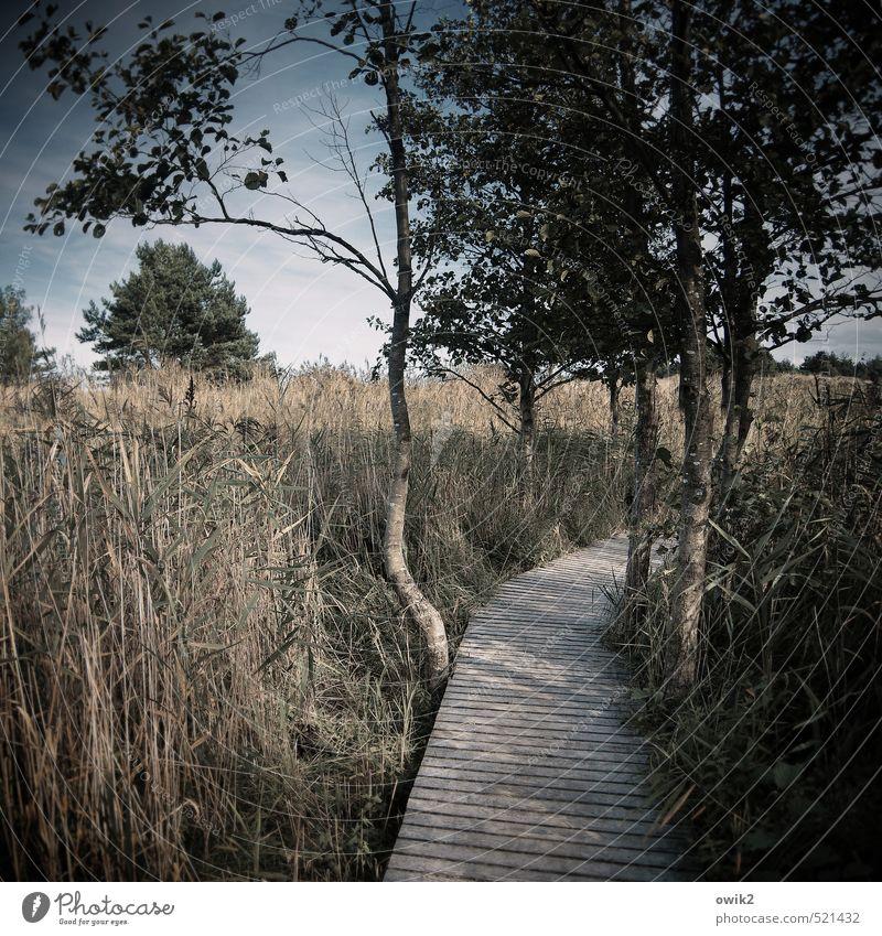 Darßer Ort Umwelt Natur Landschaft Pflanze Baum Sträucher Wege & Pfade Naturlehrpfad Holzweg achtsam Ordnungsliebe Kontrolle Naturschutzgebiet Nationalpark