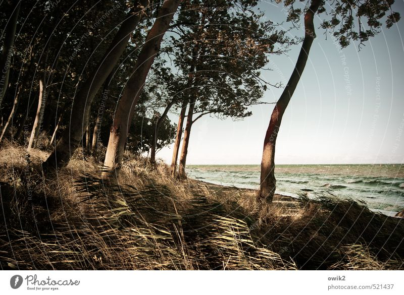 Windige Küste Umwelt Natur Landschaft Pflanze Wolkenloser Himmel Herbst Klima Schönes Wetter Baum Gras Sträucher Wildpflanze Windflüchter Wellen Strand Idylle