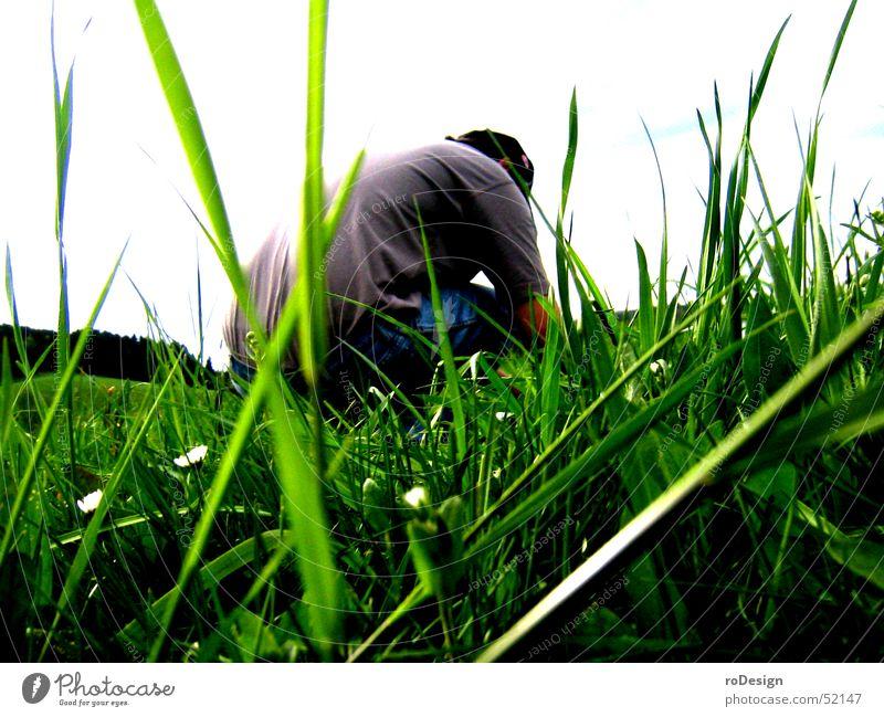 Hocken im Gras Natur Wiese Halm hocken