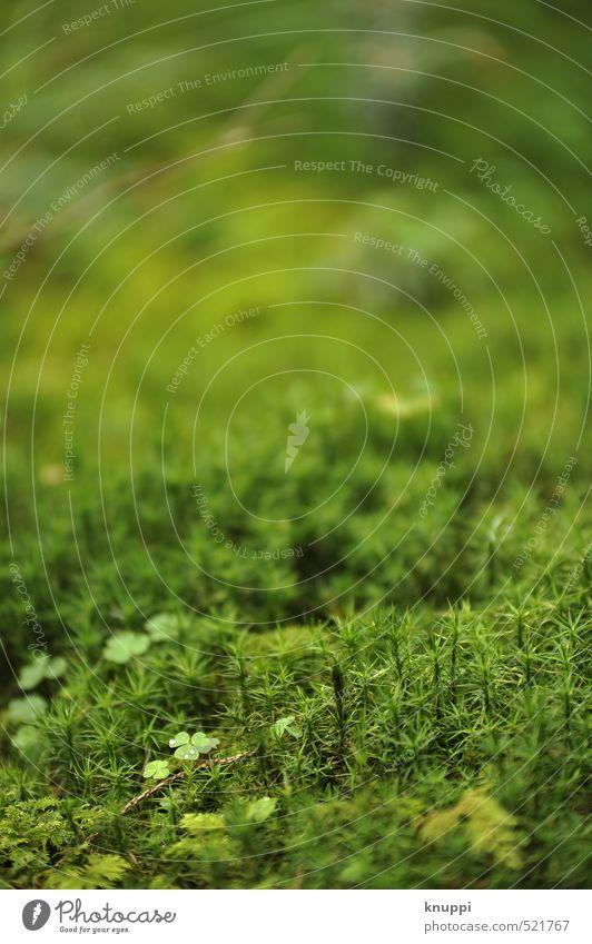 Moos Umwelt Natur Pflanze Sonne Sonnenlicht Frühling Sommer Schönes Wetter Wildpflanze Klee Park Wald dünn frisch Zusammensein hell saftig Spitze stachelig