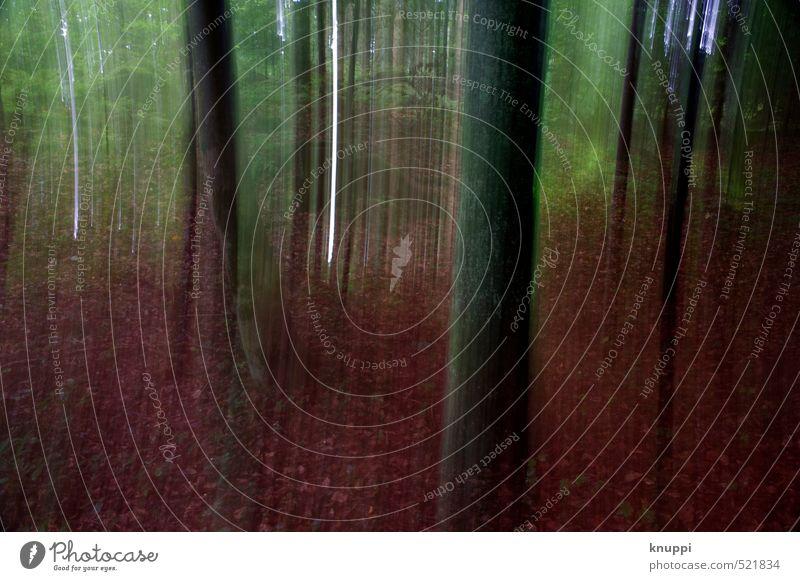 Wald Natur Pflanze grün Baum rot Landschaft Blatt schwarz dunkel Umwelt Herbst Luft orange Erde bedrohlich