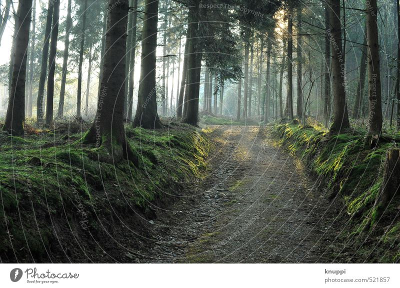 früh morgens... Gesundheit Fitness Ausflug Freiheit Sommerurlaub wandern Energiewirtschaft Erneuerbare Energie Sonnenenergie Umwelt Natur Landschaft Pflanze