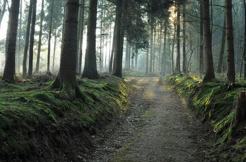 früh morgens... Natur Pflanze grün weiß Sommer Sonne Baum Landschaft Wald Umwelt Frühling grau Freiheit Gesundheit Energiewirtschaft Luft
