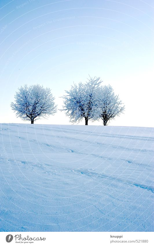 three trees Umwelt Natur Landschaft Pflanze Urelemente Luft Wasser Himmel Wolkenloser Himmel Sonne Sonnenaufgang Sonnenuntergang Sonnenlicht Winter
