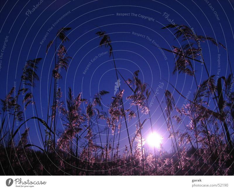 Tag.am.See.3 Natur Sonne blau ruhig Erholung träumen Schilfrohr Schweden Gewässer