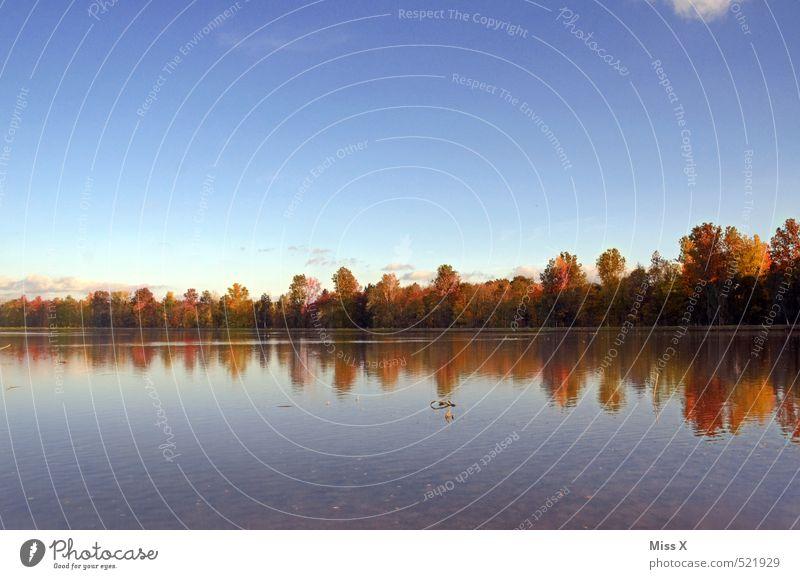 Horizont Umwelt Natur Landschaft Wolkenloser Himmel Herbst Schönes Wetter Baum Wald Küste Teich See Stimmung ruhig Erholung Idylle Wasserspiegelung Waldrand