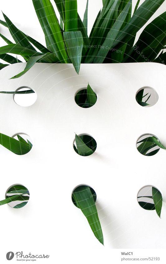 Eingelocht 02 Sessel weiß Loch Pflanze Blatt Palme grün Faser Mauer Wand Stuhllehne Decke Spitze
