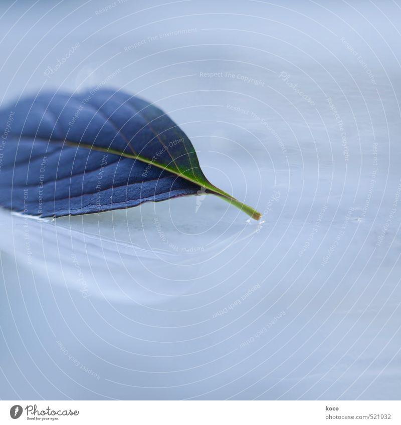 blaue stunde. Natur Wasser Wassertropfen Himmel Frühling Sommer Herbst Pflanze Blatt Tropfen berühren liegen Wachstum authentisch einfach Flüssigkeit frisch