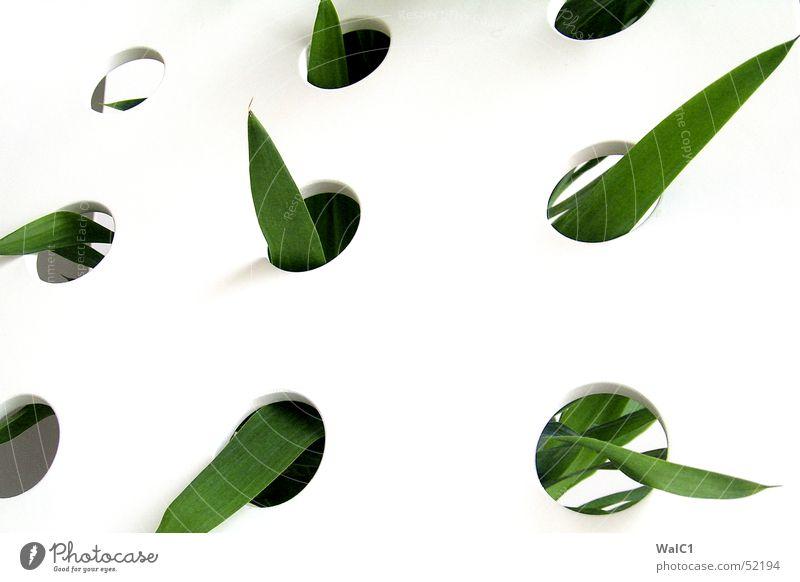 Eingelocht 03 Sessel weiß Loch Pflanze Blatt Palme grün Faser Mauer Wand Stuhllehne Decke Spitze