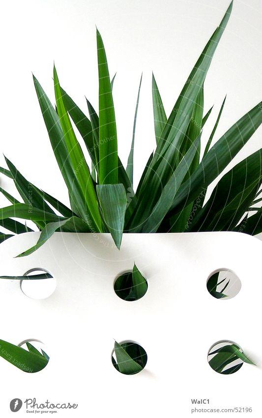 Eingelocht 05 Sessel weiß Loch Pflanze Blatt Palme grün Faser Mauer Wand Stuhllehne Decke Spitze