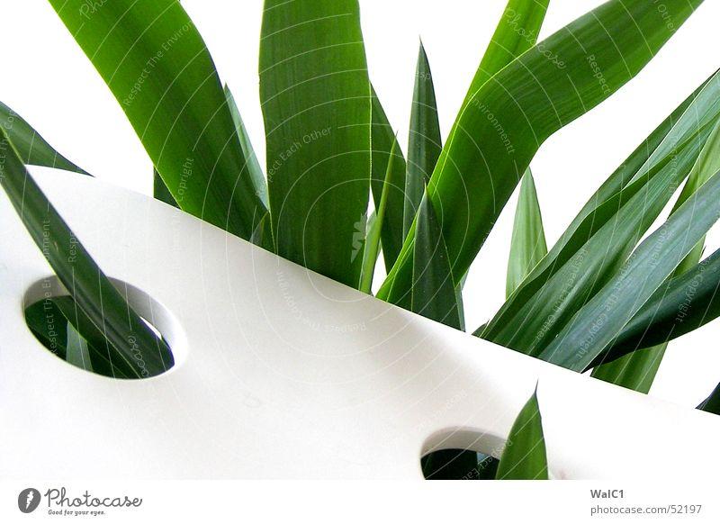 Eingelocht 06 Sessel weiß Loch Pflanze Blatt Palme grün Faser Mauer Wand Stuhllehne Decke Spitze