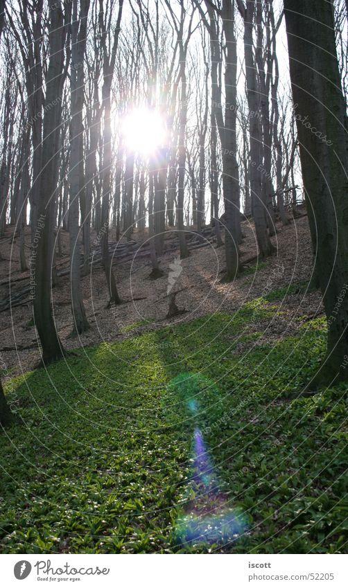 bärlauch wald Bärlauch Wald Baum Herbst Waldlichtung Blatt Sonne Gegenlicht Sonnenlicht Blendenfleck