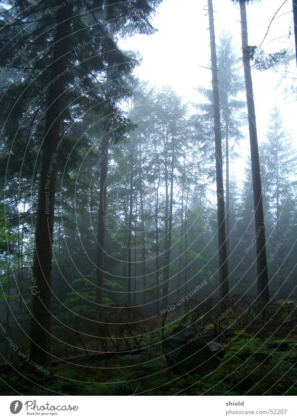 wald Wald schlechtes Wetter