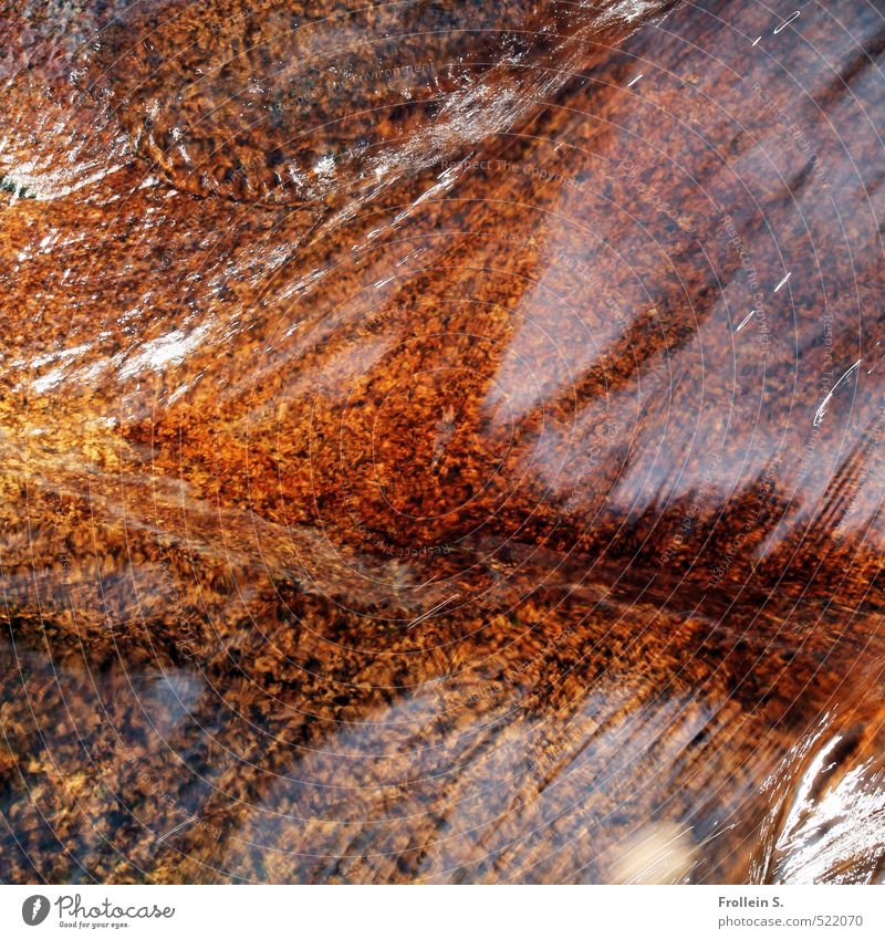 Flow Umwelt Natur Urelemente Wasser Felsen Flussufer Bach Stein Flußbett natürlich wild braun orange fließen Rauschen plätschern Farbfoto Außenaufnahme