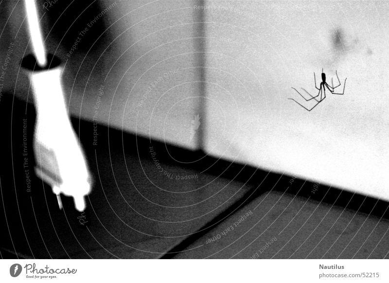Mein Badezimmer Stecker Spinne Schwarzweißfoto Kontrast Fliesen u. Kacheln Netzstecker