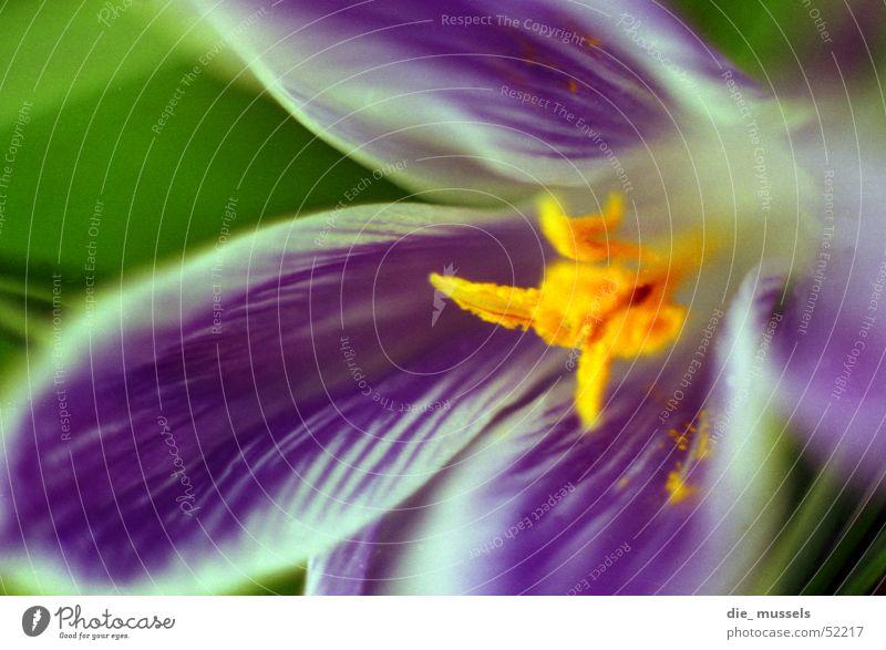 blaue blume schön Blume Pflanze Blüte Garten