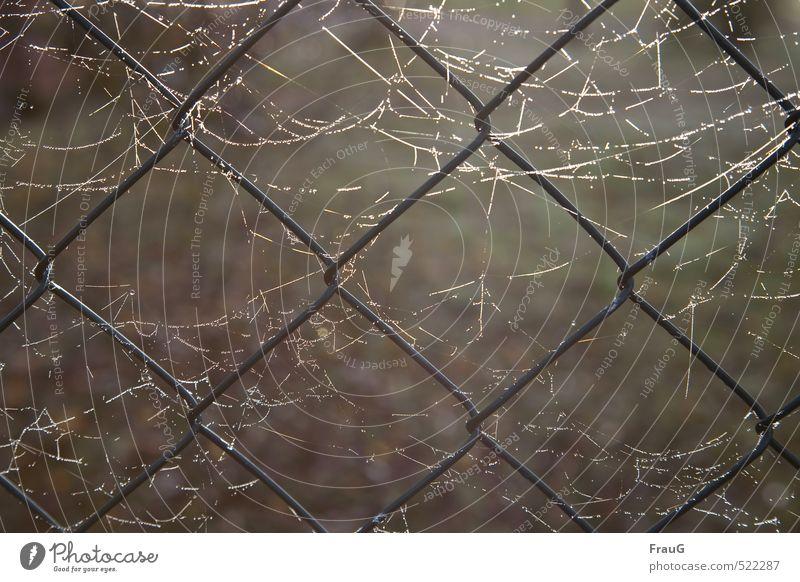 Netzwerke Garten Zaun Sonnenlicht Herbst Maschendraht Metall glänzend Leichtigkeit Spinnennetz Tau erleuchten Maschendrahtzaun Vernetzung Farbfoto Außenaufnahme