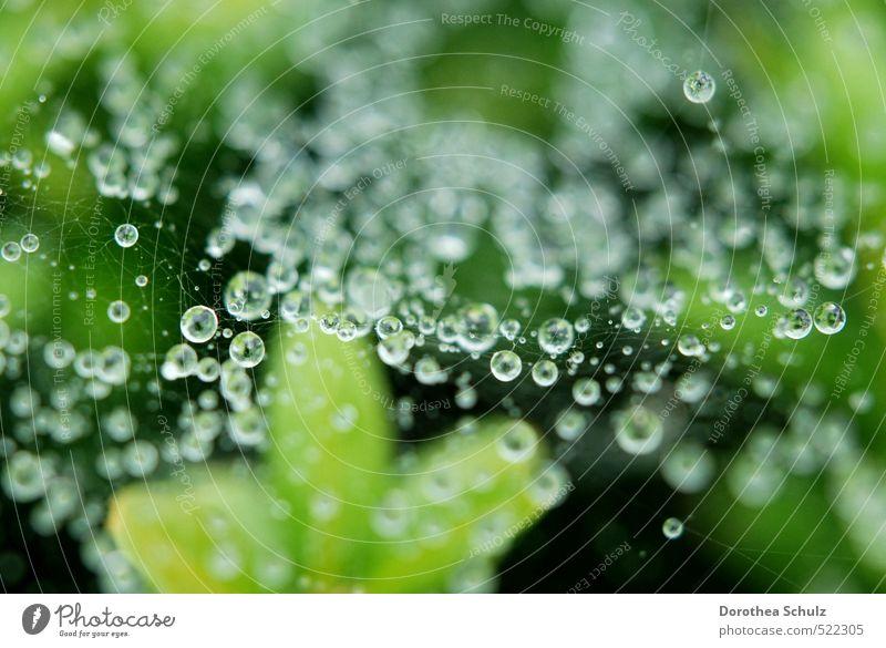 Nieselregen Natur Tier Wassertropfen Herbst Regen Pflanze Spinne Linie Knoten Netz Netzwerk atmen glänzend leuchten ästhetisch kalt nass natürlich grün silber