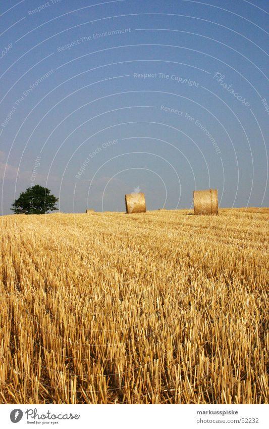 ernte Feld Landwirtschaft Stroh Strohballen Baum einbringen Weizen Ernte Sonne Himmel Korn
