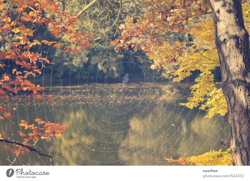 altes 2013 / bärensee Umwelt Natur Landschaft Wasser Herbst Klima Schönes Wetter Pflanze Baum Blatt Seeufer Holz Erholung Idylle Wellness Baumstamm Farbfoto