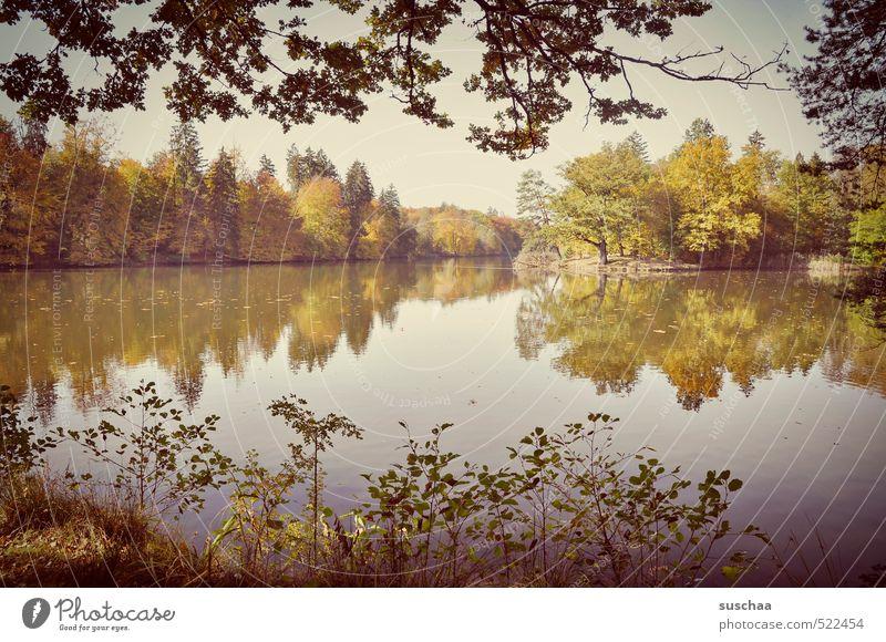 bärensee Umwelt Natur Landschaft Pflanze Urelemente Luft Wasser Himmel Herbst Klima Schönes Wetter Baum Sträucher Blatt Küste See frisch Hoffnung Idylle