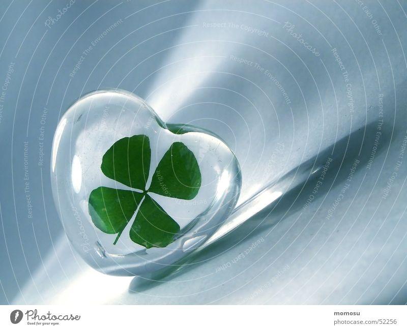 Glücksklee Klee Kleeblatt Glücksbringer vierblättrig Herz Glas luck