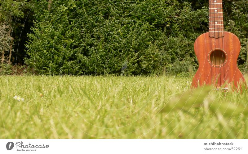 da sprießen die ukulelen... grün Musik Wachstum Rasen Gitarre Saite Ukulele