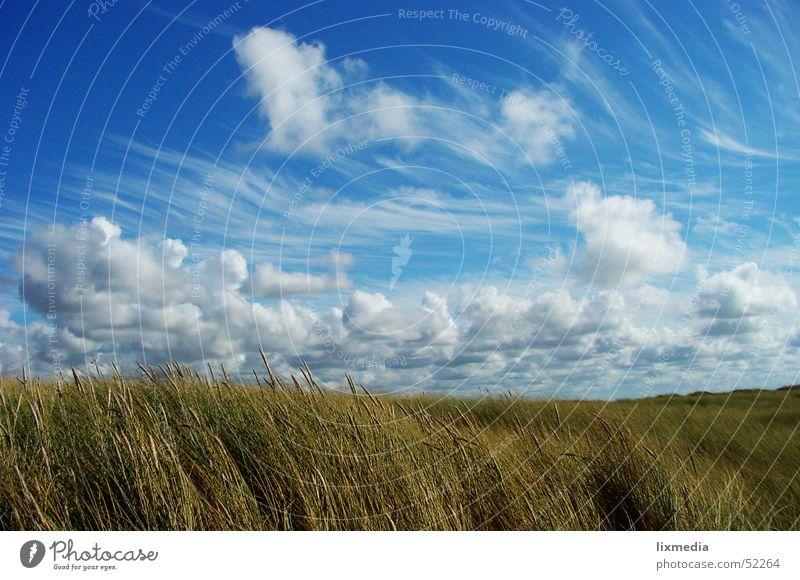 Typisch Dänemark Himmel blau Wolken Gras Feld Wind Getreide Stranddüne