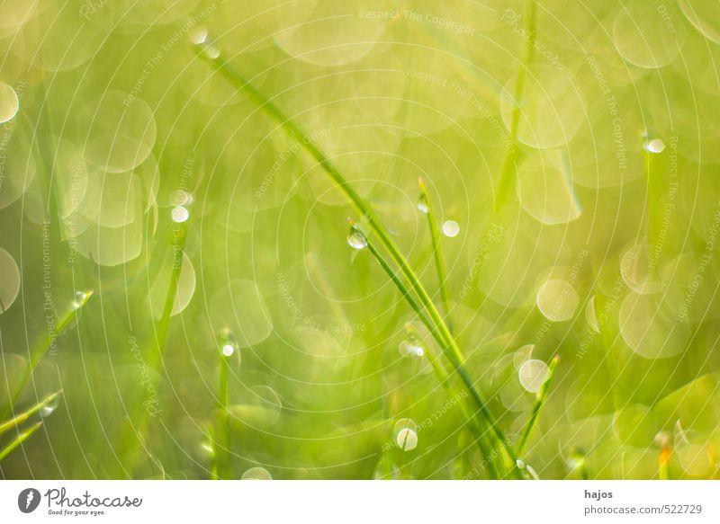 Grashalm mit Tautropfen Natur grün Pflanze Wiese Herbst Garten Hintergrundbild Wachstum Dekoration & Verzierung frisch Wassertropfen Halm Botanik