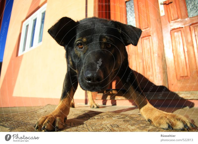 Buddy Körper Haare & Frisuren Gesicht Tier Haustier Hund Tiergesicht Fell 1 Spielen Neugier Vertrauen Freundschaft Farbfoto mehrfarbig Sonnenlicht