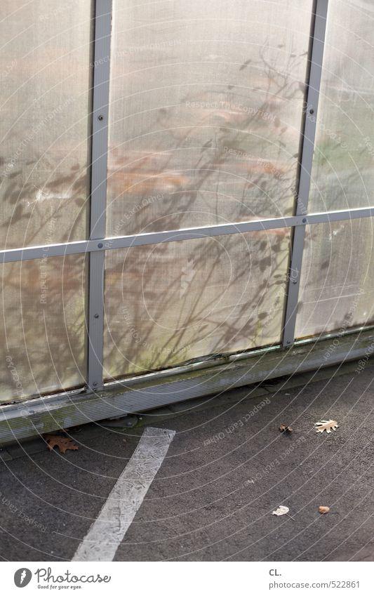 stillleben Umwelt Natur Herbst Pflanze Sträucher Blatt trist herbstlich Linie Streifen verstecken Wege & Pfade Platz Asphalt Boden Straßenbelag Straßenrand