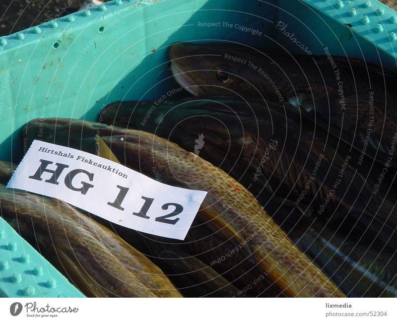 Frischer Fisch frisch Fischer Gebiss Kiste Meer 112 hg Dänemark Zettel hirtshals fiskeauktion