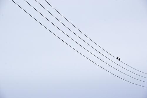 pärchen Tier Liebe Paar Freundschaft Vogel Zusammensein sitzen Tierpaar niedlich Kabel Romantik Verliebtheit Sympathie Ehepaar