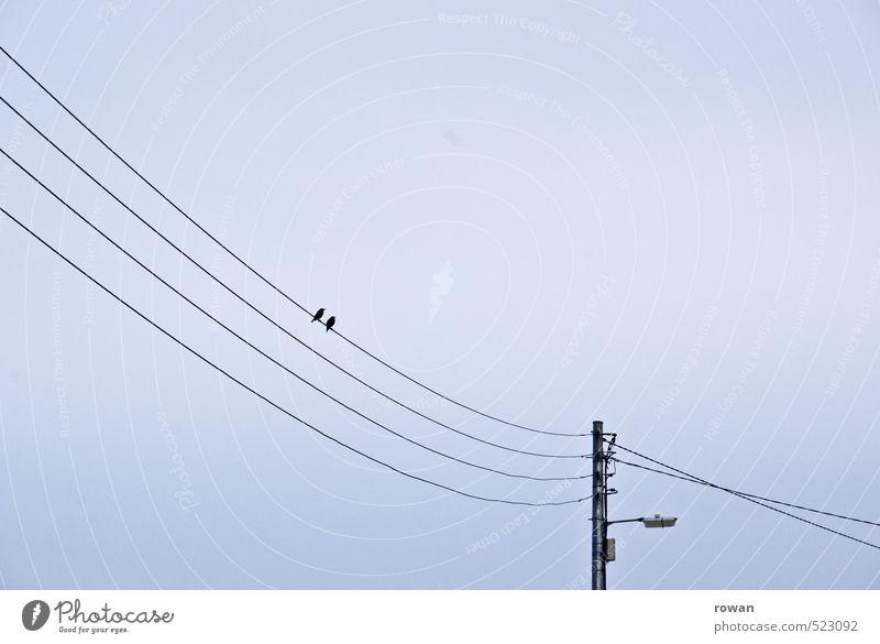 zu zweit Vogel 2 Tier Tierpaar Zusammensein Sympathie Freundschaft Liebe Verliebtheit Treue Romantik Paar Kabel Strommast Straßenbeleuchtung Farbfoto