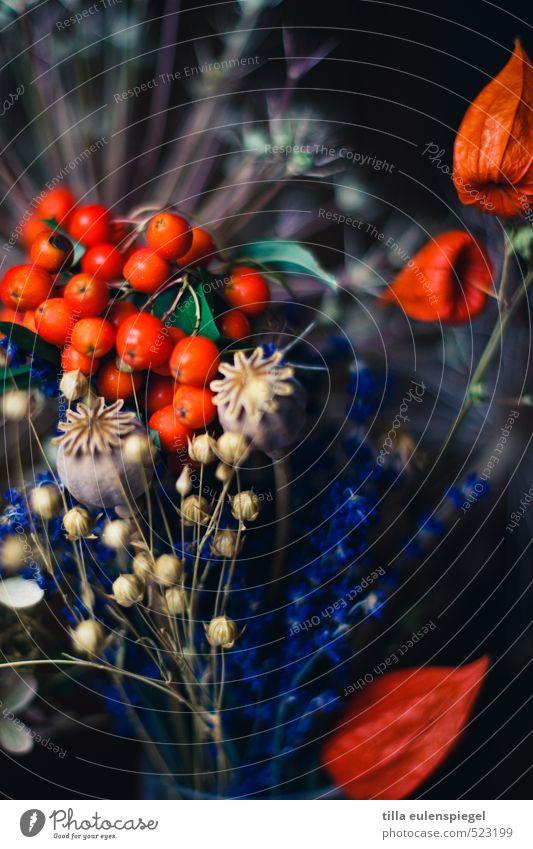 Herbstgruß Pflanze Blume Grünpflanze Trockenblume Mohn Mohnkapsel Lavendel Blumenstrauß verblüht natürlich trocken rot schwarz Vergänglichkeit getrocknet