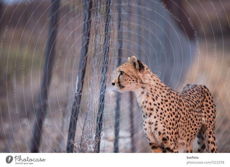 Gefangenschaft- Blick in die andere Welt Natur Ferien & Urlaub & Reisen Pflanze Einsamkeit Tier Ferne Umwelt Gefühle Traurigkeit Denken träumen Park Wildtier
