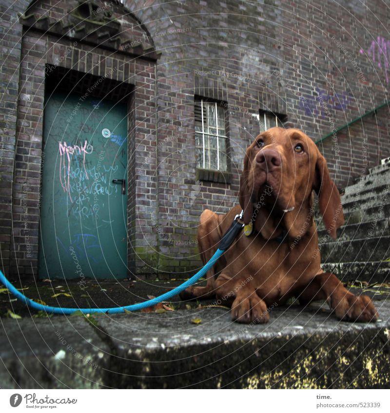 Ben guckt Mauer Wand Treppe Terrasse Tier Haustier Hund Hundeleine 1 Graffiti beobachten liegen Neugier trashig Stadt braun Gelassenheit geduldig ruhig